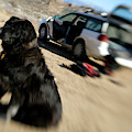 Dog In Front Of A Climbers Car by Corey Rich