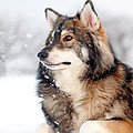 Dog In The Snow by Grant Glendinning