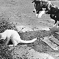 Dog Jumping On An Unsuspecting Kitten by Lynn Lennon