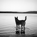 Dog Looking Over Abiquiu Reservior by Ryan Heffernan