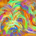 Dog Matze by Go Van Kampen