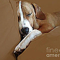 Dog - Mr. Oliver Snoozing by Maureen Tillman