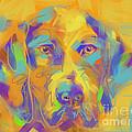 Dog Noor by Go Van Kampen
