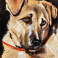 Dog Portrait Drawing by Daliana Pacuraru