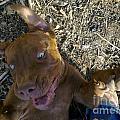Dog Smile by Bozena Simeth