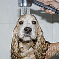 Dog Taking A Shower by Mats Silvan