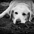 Dog Tired by Kelly Hazel