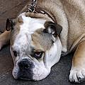 Dog. Tired. by Rick Locke