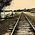 Dog Walk Along The Wayzata Train Tracks by Susan Stone
