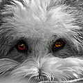 Coton Eyes by Keith Armstrong