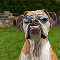Dog Wearing Sunglass by Stephanie McDowell
