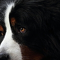 Dog by Wingsdomain Art and Photography