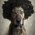Dog With A Crazy Hairdo by Chad Latta