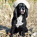 Dog With A Sailor Hat by Mats Silvan