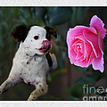 Dog With Pink Rose by Rose Zhou