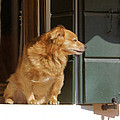 Doggie In The Window by Ron Harpham