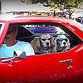 Doggies In The Window by Bobbee Rickard