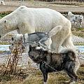 Dogs And Polar Bear by David Matthews