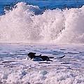 Dogs At Carmel California Beach by Barbara Snyder