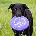 Dogs For Peace by James BO  Insogna