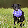 Dogs For Peace Too by James BO  Insogna