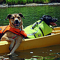 Dogs In A Kayak by Susan Jensen