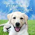 Dogs Leave Paw Prints On Your Heart by Li Or