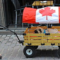 Dog's Life In Canada by Kume Bryant