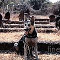 Dogs Of War by Mel Steinhauer