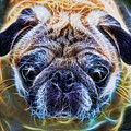 Dogs - The Psychedelic Fantasy Pug by Lee Dos Santos