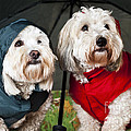 Dogs Under Umbrella by Elena Elisseeva