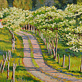 Dogwood Allee by Keith Burgess