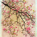 Dogwood Canvas 3 by Jessica Jenney
