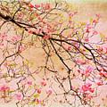 Dogwood  Canvas by Jessica Jenney
