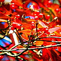 Dogwood In Autumn by Lisa Wooten