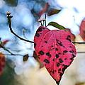 Dogwood Leaf - Red Leaf Falling With Watching Buds by Wayne Nielsen