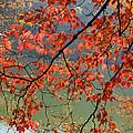 Dogwood Tree by Kenneth Murray