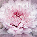 Dolled-up Dahlias by Leda Robertson