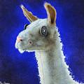 Dolly Llama... by Will Bullas