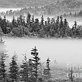 Dolly Sods Wilderness D300_10363_bw by Kevin Funk