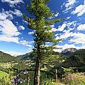 Dolomites - Tree Over The Valley by Antonio Scarpi