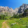 Dolomiti - Contrin Valley by Antonio Scarpi