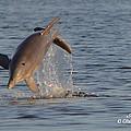 Dolphin I Mlo by Mark Olshefski