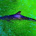 Dolphin In The Shallows by David Lee Thompson