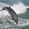 Dolphin Leap by Deborah Good