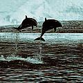 Dolphin Pair-in The Air by Douglas Barnard