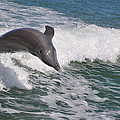 Dolphin Riding The Waves by Deborah Good