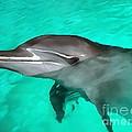 Dolphin by Sergey Lukashin