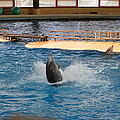 Dolphin Show - National Aquarium In Baltimore Md - 1212102 by DC Photographer