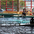 Dolphin Show - National Aquarium In Baltimore Md - 1212107 by DC Photographer